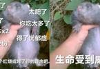 网红时代谢幕,土味文化登场:一只竹鼠走红背后的思考