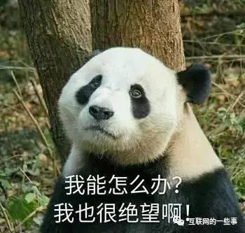 2017年中国第一个网红,就他了
