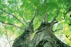 请将你的能力长成一棵树,而不是一片草