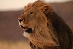 腾讯投资VS阿里资本,谁是最强王者?