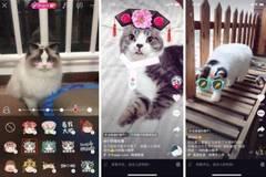 抖音火山小上线猫脸贴纸 猫奴们拍照不用愁了