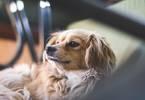 波奇宠物IPO:2020宠物行业的强心针