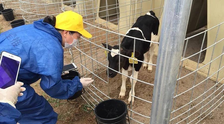 入驻天猫三年沉淀1000万粉丝,认养一头牛做对了什么?