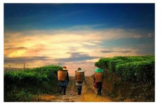 农村经济赛道上,阿里京东网易们谁更能成为未来农业的引领者?