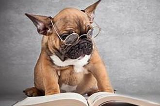 3-5年的产品狗你会做产品规划吗?
